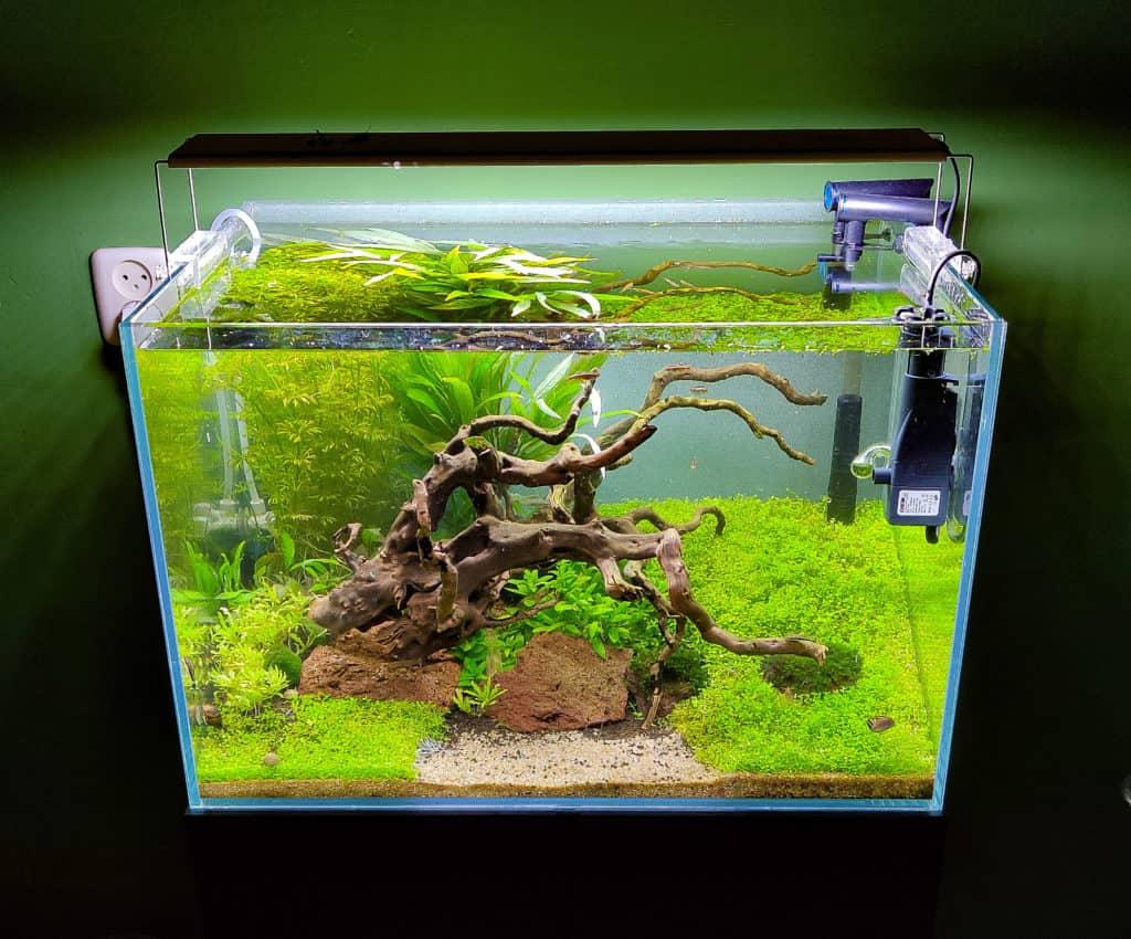 Jaaps Green Aquarium